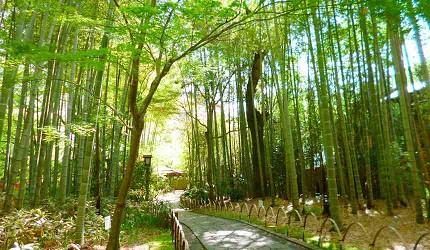 日本中部溫泉修善寺溫泉