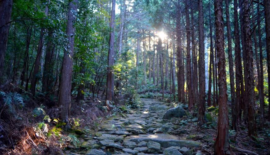 感受日本自然與歷史的震撼!東紀州「三重熊野」世界遺產巡禮