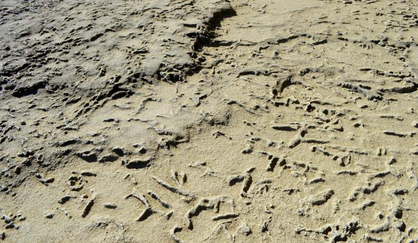東紀州「三重熊野」鬼之城沉積層珊瑚