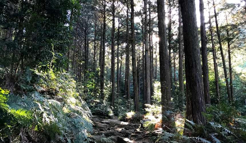 三重東紀州熊野古道
