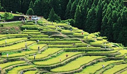 熊野市的「丸山千枚田」