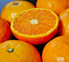 东纪州的条件特别适合柑橘生长