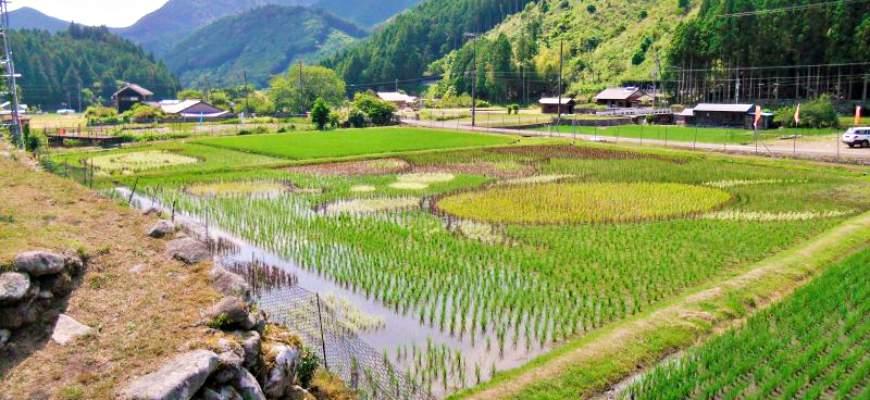 熊野市小又彩繪稻田藝術
