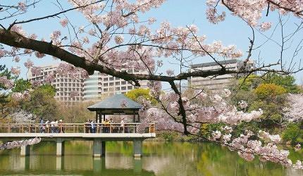 日本中部樱花推荐爱知鹤舞公园