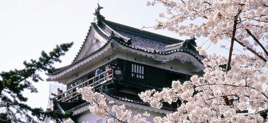 日本中部樱花推荐爱知冈崎城冈崎公园