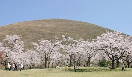 日本中部樱花推荐静冈伊豆高原樱花之里