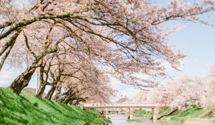 日本中部樱花推荐岐阜新境川堤