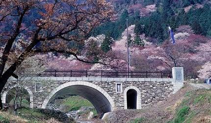日本中部樱花推荐岐阜霞间溪