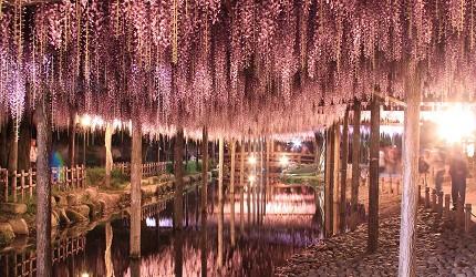 津岛市天王寺公园藤花祭夜晚景色