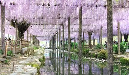 津岛市天王寺公园藤花祭白天景色