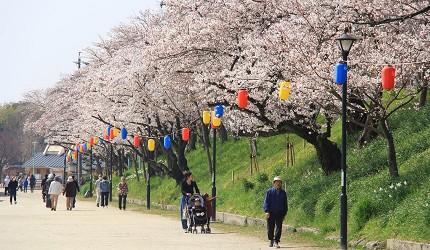 津岛市樱花白天景色