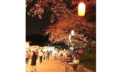 津岛市樱花夜晚景色