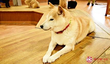 静冈景点亲子游推荐富士野生动物园狗馆里的狗