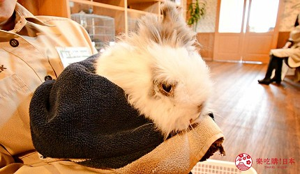 静冈景点亲子游推荐富士野生动物园兔子馆里的兔子