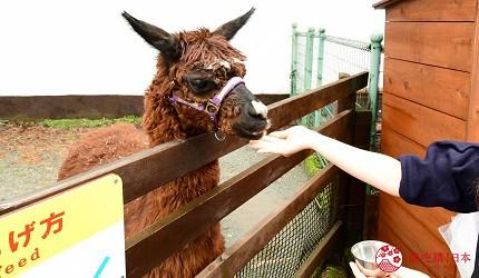 静冈景点亲子游推荐富士野生动物园里的驴子