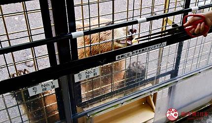 静冈景点亲子游推荐富士野生动物园丛林巴士餵野生动物