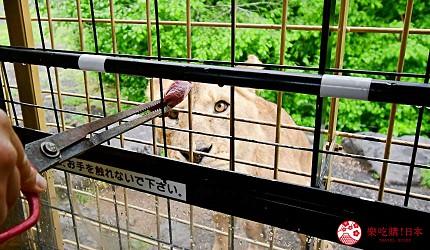静冈景点亲子游推荐富士野生动物园丛林巴士喂野生动物