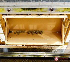 富士野生动物园的丛林巴士车上设备