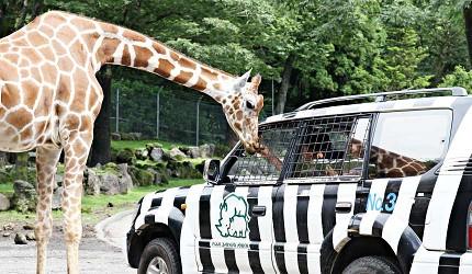 静冈景点亲子游推荐富士野生动物园野生动物区导航车(ナビゲーションカー)