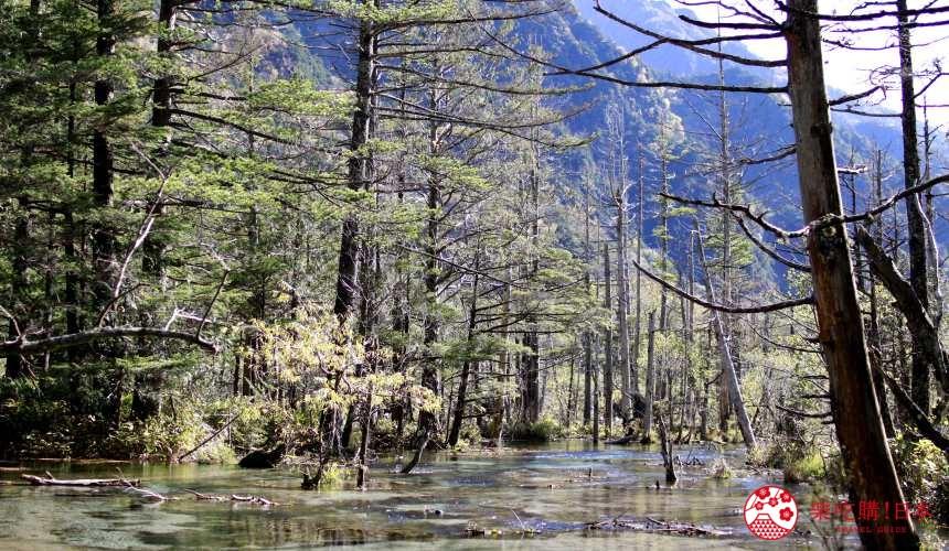日本中部名古屋自驾租车推荐景点上高地岳泽湿原